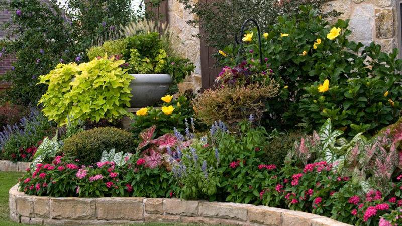 Flower Bed Ideas Sun Beautiful Black