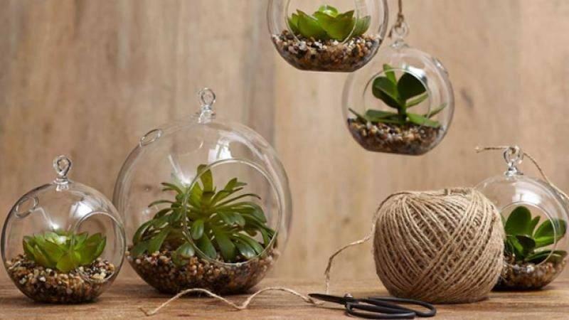 Homelife Indoor Gardening Ideas