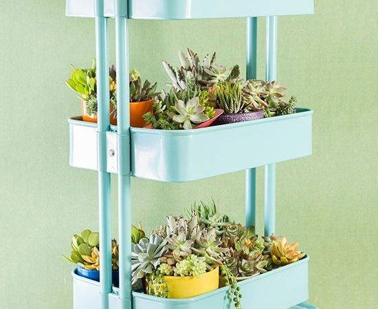 Ideas Creating Perfect Indoor Garden