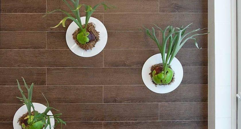 Indoor Garden Ideas Gardening