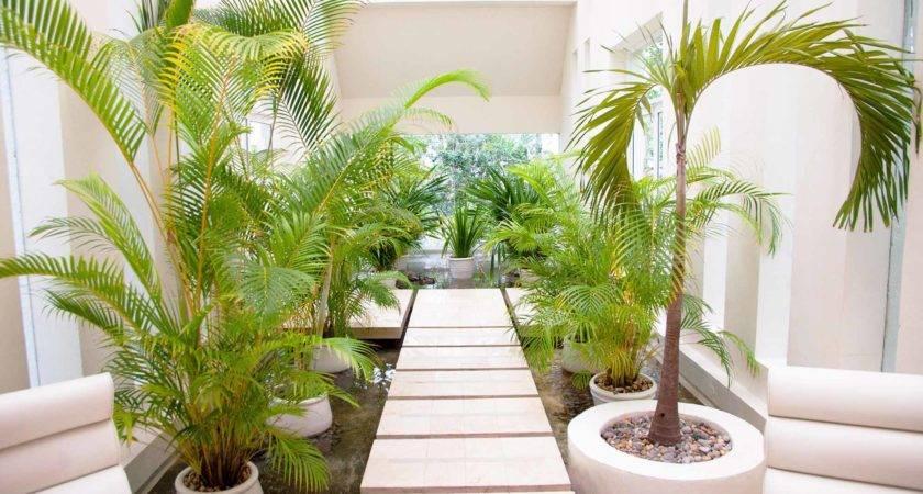 Indoor Garden Ideas Your Living Space Plants
