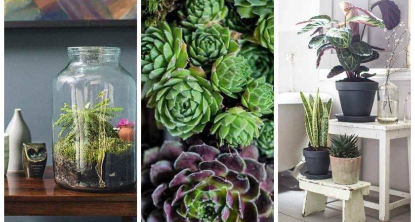 Indoor Gardening Tips Garden Idea