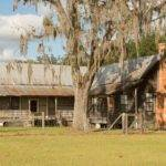 Live Oak Old House Dreams