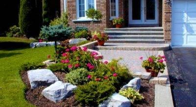 Lovely Sun Flower Plants Cute Garden House Fancy
