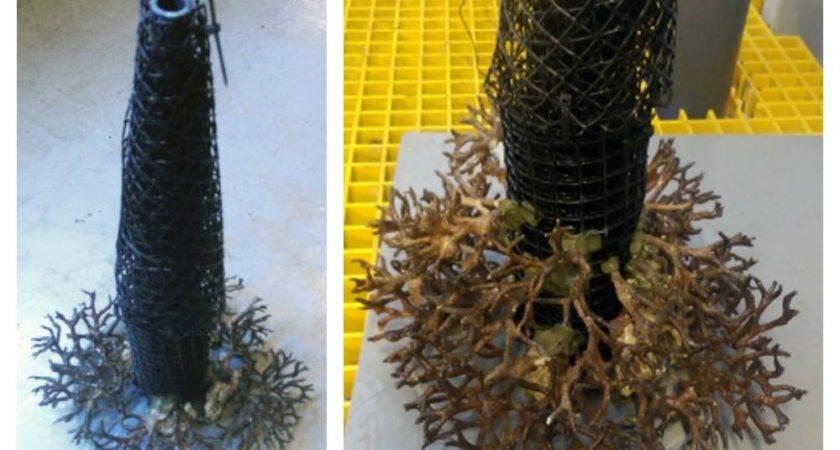 Making Live Coral Christmas Tree Aquarium