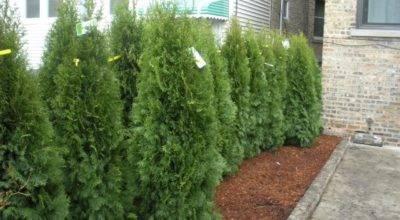 Small Garden Privacy Ideas Photograph Landscaping