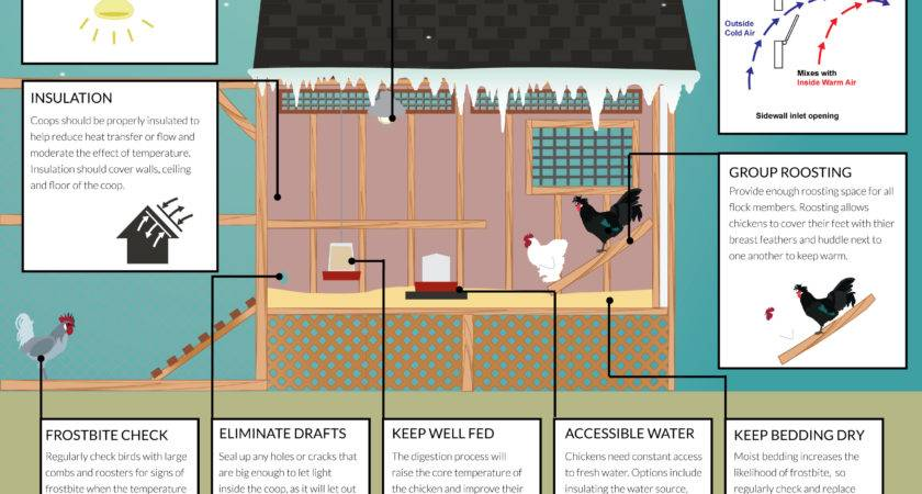 Winterizing Your Chicken Coop Infographic Poultrydvm
